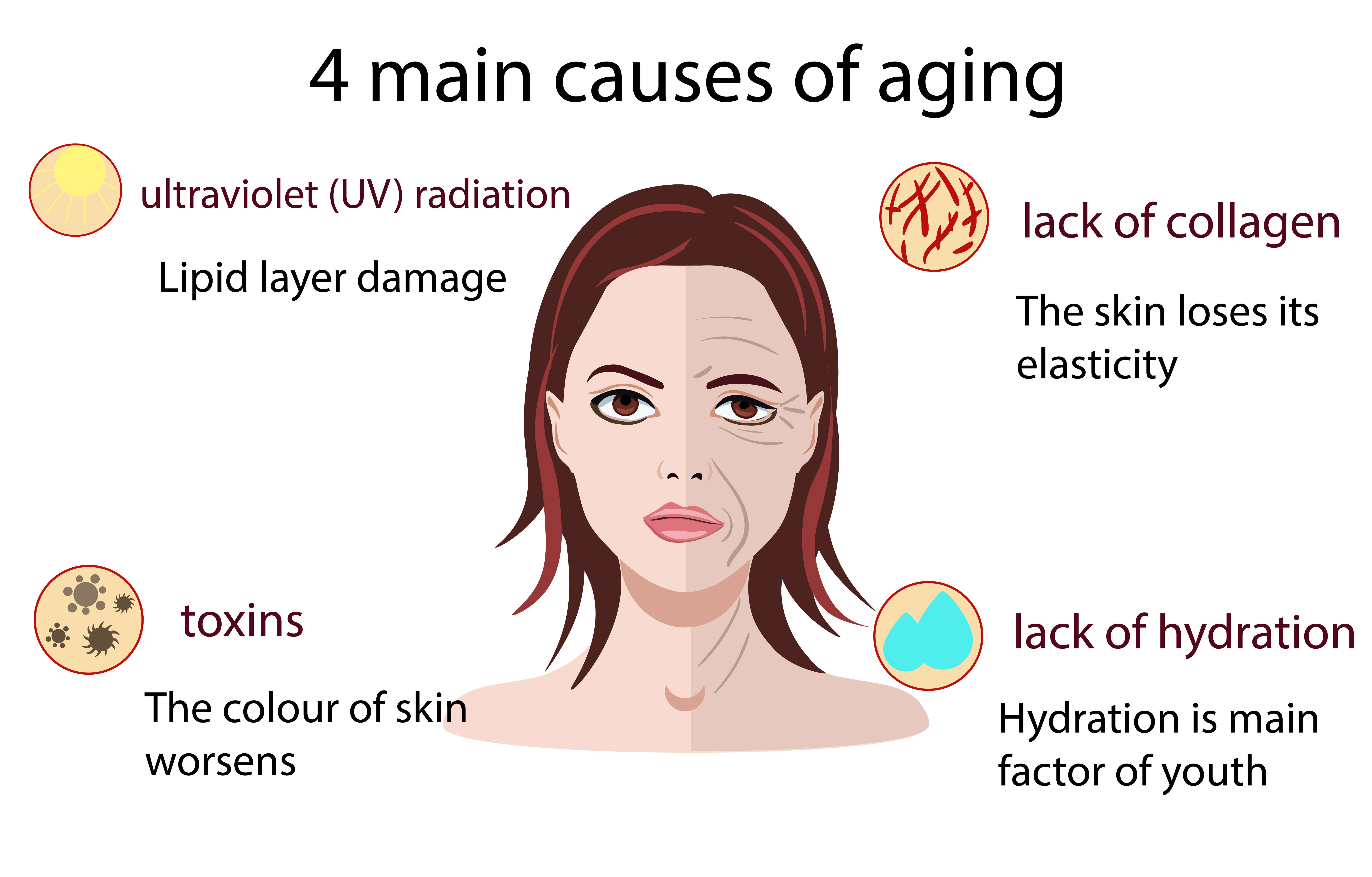 Infographic on the 4 main causes of aging