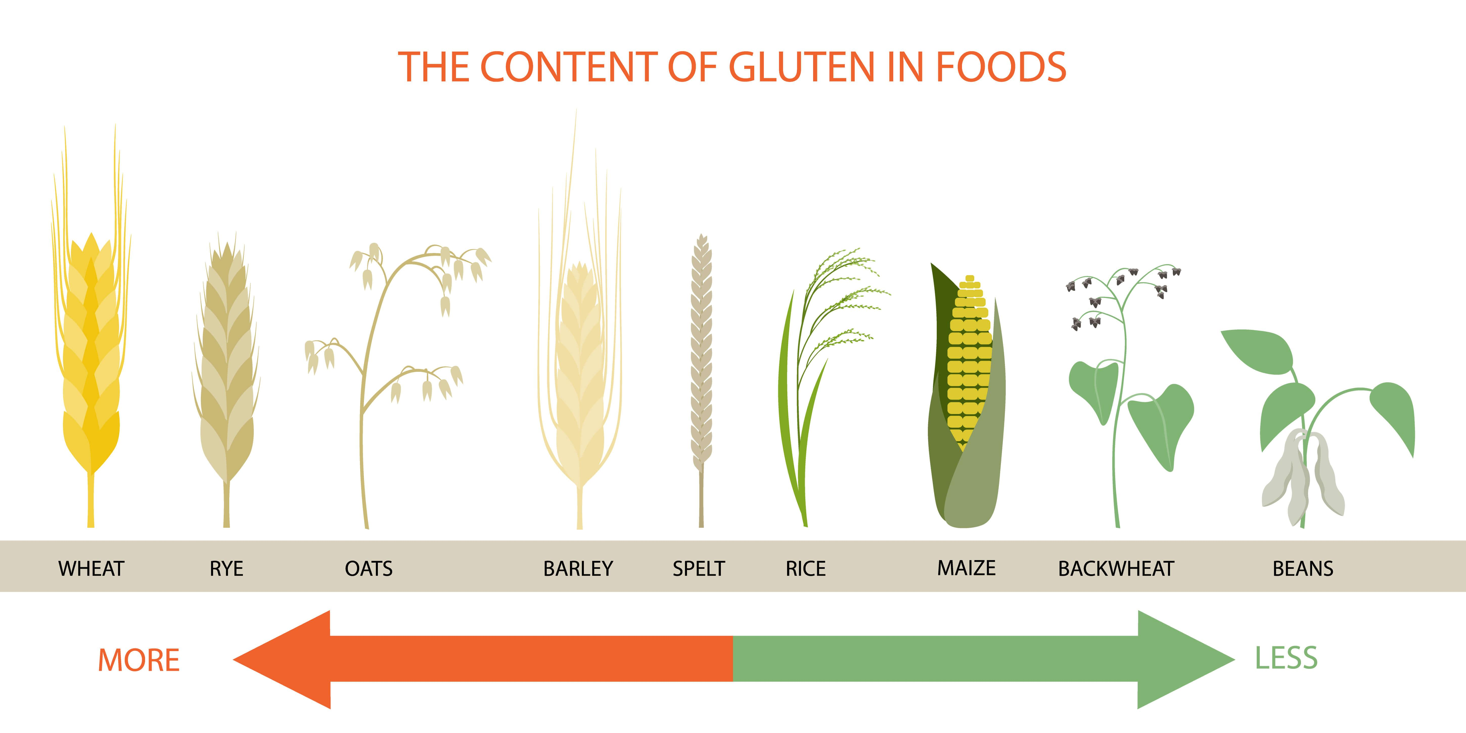 Illustration of gluten content of various foods on a scale