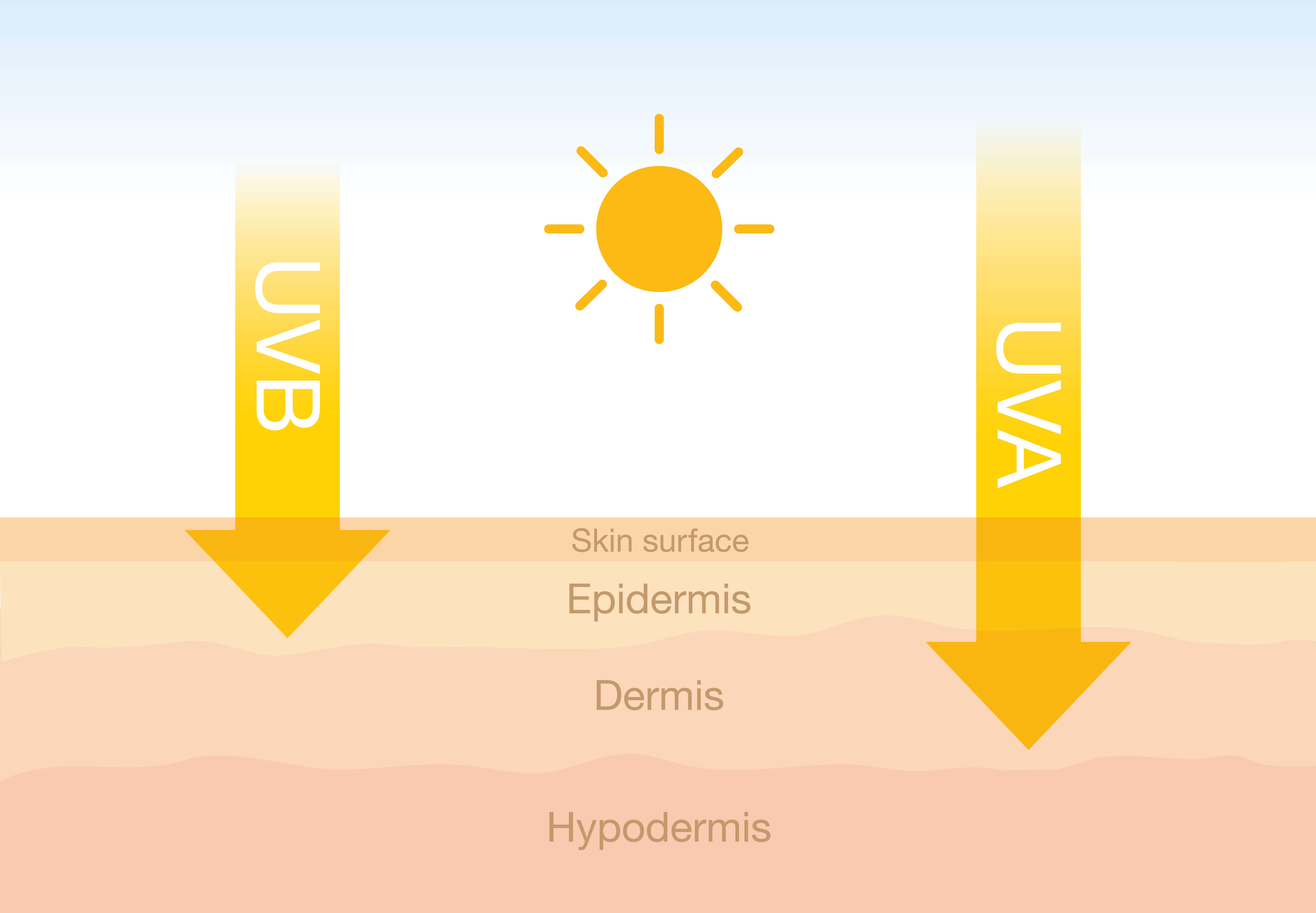 Infographic on UVA and UVB penetrating the skin