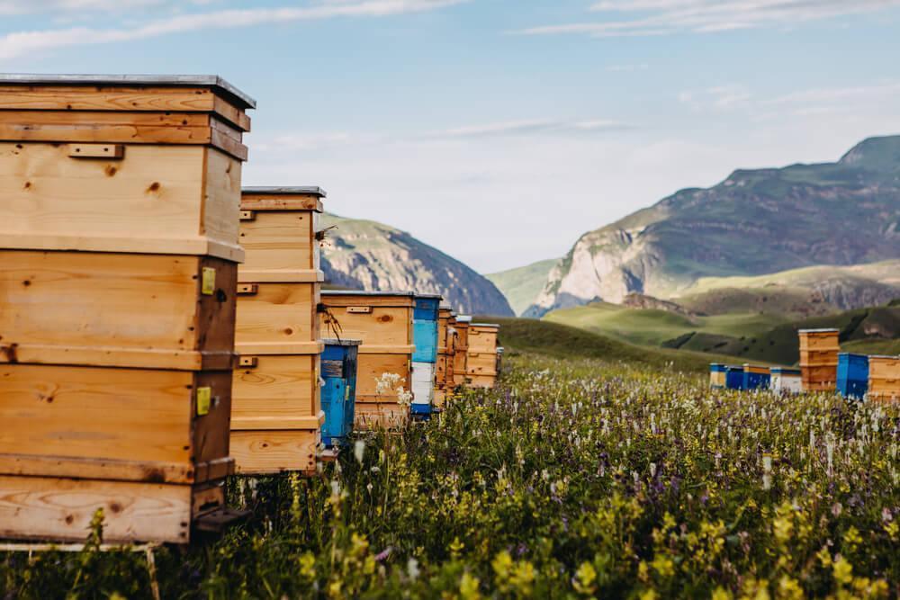 Hives for harvesting honey